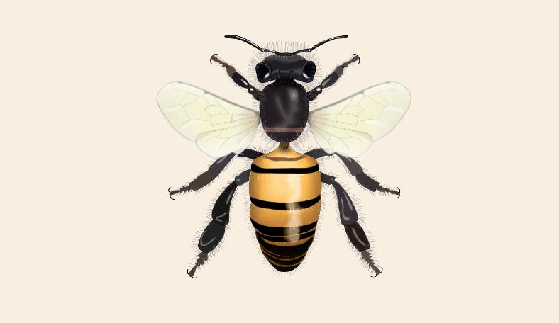 O mundo das abelhas